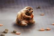 squirrel_40x50cm